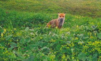 Krajina kde lišky dávají dobrou noc...